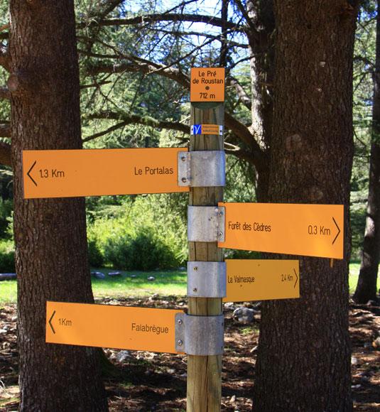 Balade en Forêt des Cèdres @ Hocquel