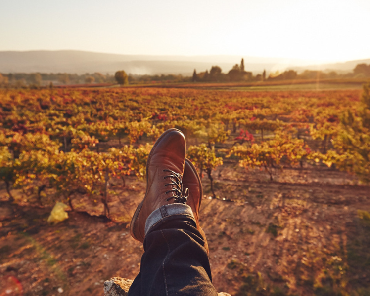 Balade d'automne dans les vignes @ Coquard