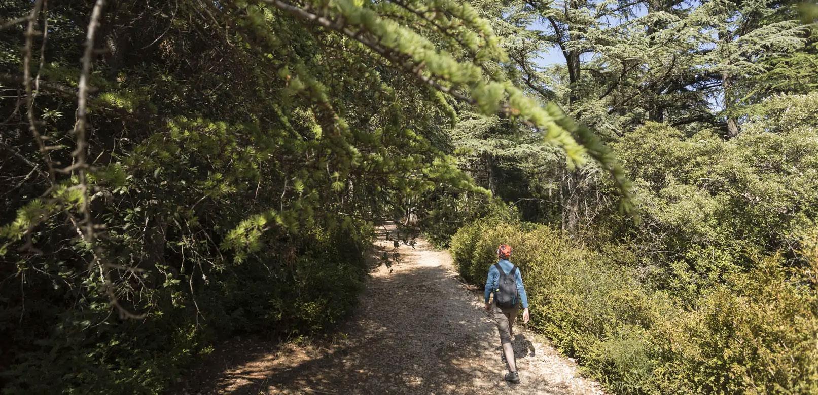 Forêt des Cèdres @ Rathay