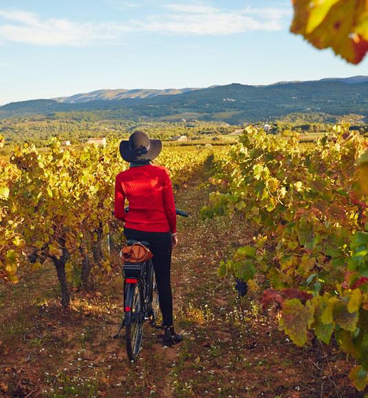 A vélo dans les vignes @ Cocquard