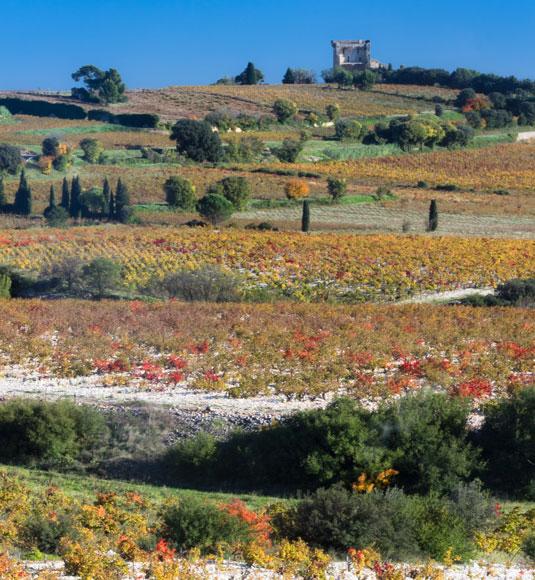 Vignes automne Châteauneuf-du-Pape @ Kessler