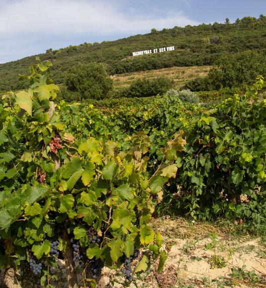 Vignes Vacqueyras @ Hocquel
