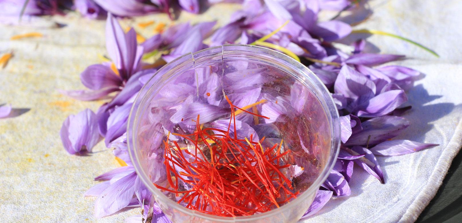 Le safran, une fleur toute en saveur