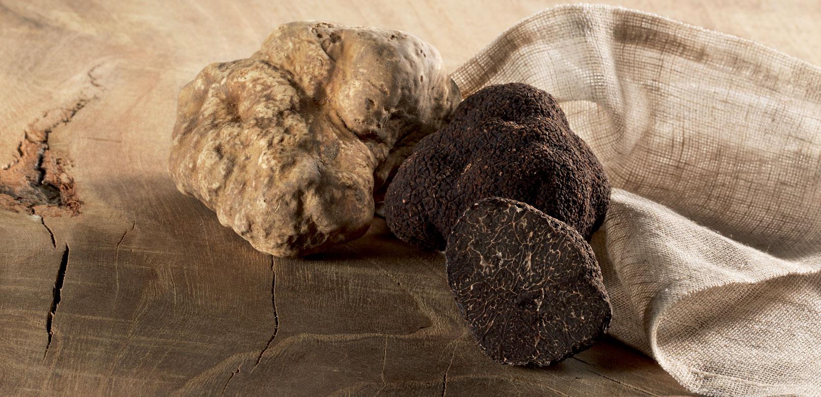Truffes en Vaucluse © Plantin