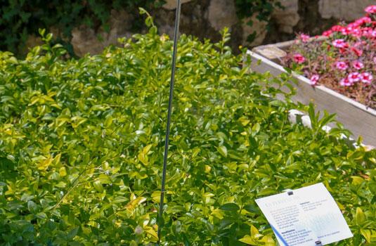Bacs plantes Jardin de la Citadelle à Ménerbes