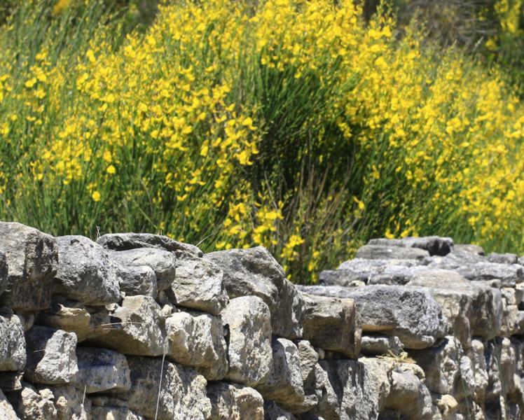 Genets en Provence © Hocquel
