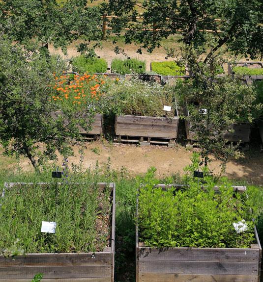 Plantes médicinales au jardin de la Citadelle