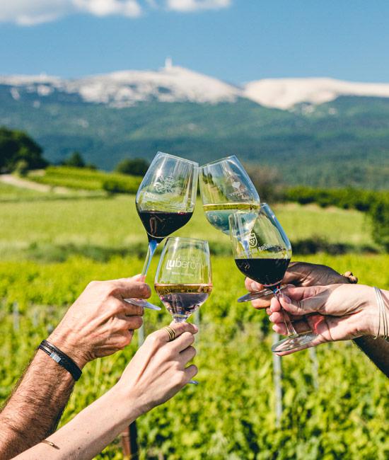 Apéro dans les vignes en Vaucluse