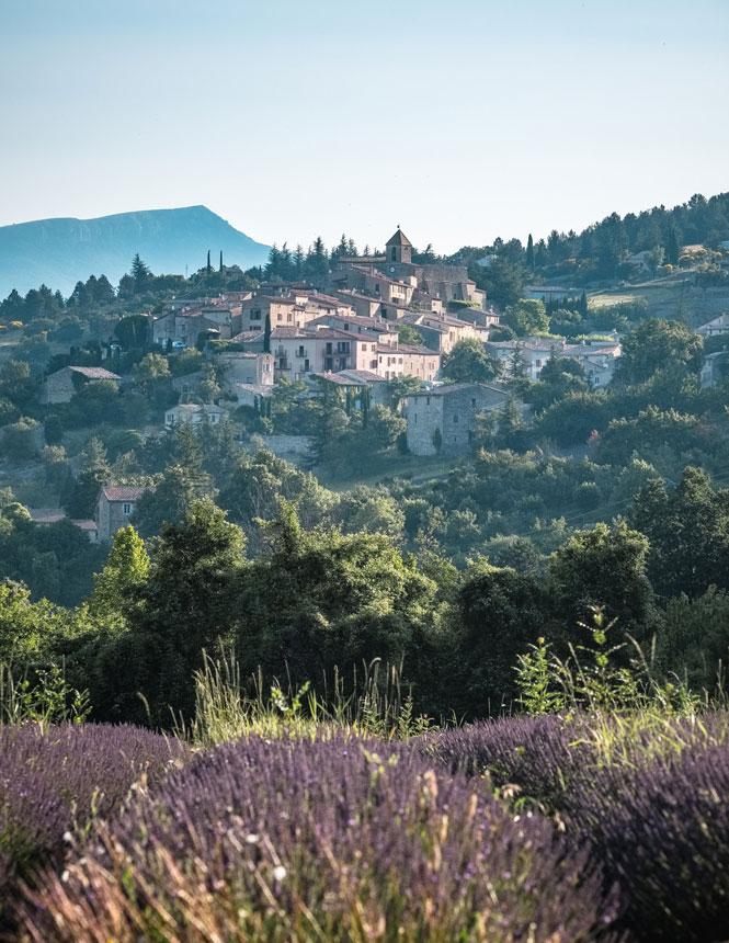Aurel et lavande en Provence