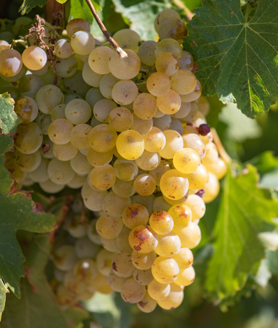 Appellation vins Vaucluse