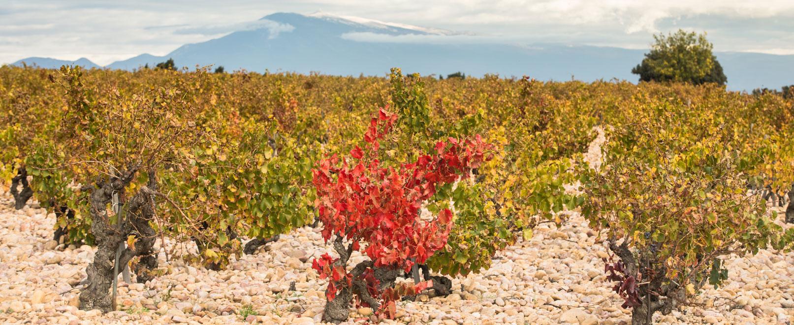 Vignes en Vallée du Rhône © Kessler