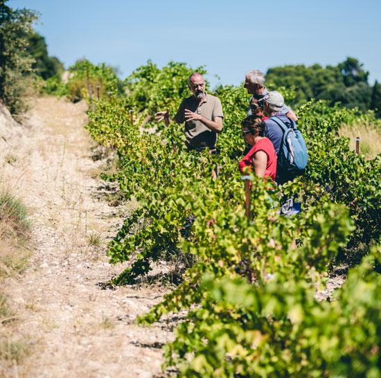 Balade dans les vignes du Vaucluse