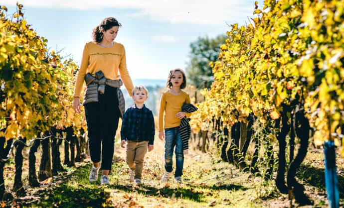 Dans les vignes du Ventoux en automne
