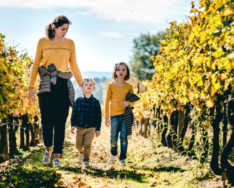 Dans les vignes du Ventoux en automne © O'Brien